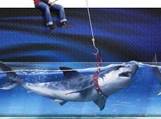 Pepsi: Shark
